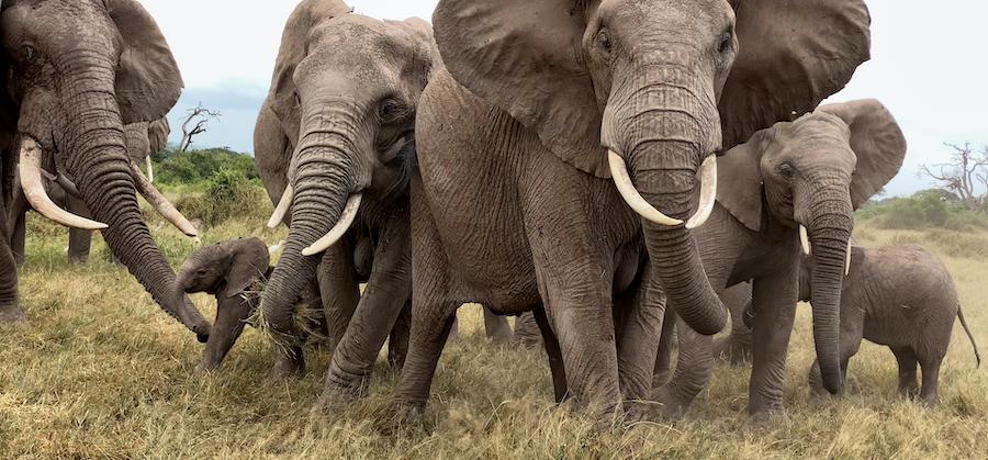 Drama in the QB family in Amboseli.
