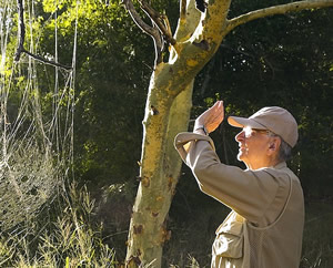 Edward O. Wilson examines an orb weaver spider web while collecting insects in Gorongosa National Park. (©Bob Poole)