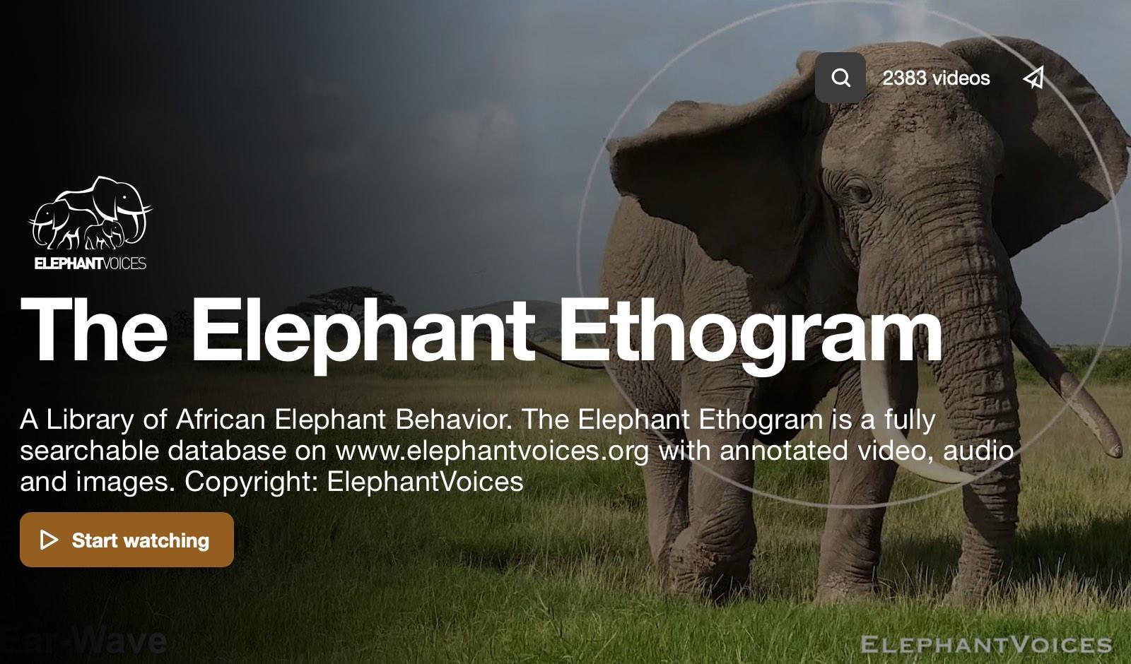 Screenshot from The Elephant Ethogram