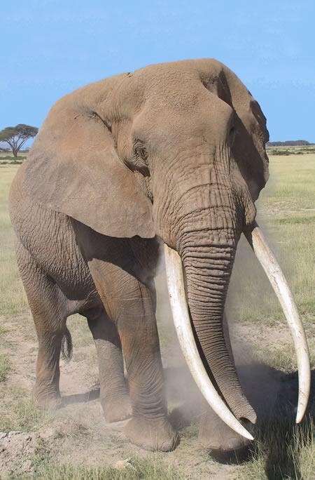 Elephants Are Extraordinary