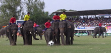 Elephant football, Thailand. (©Bob Poole)