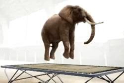 From  Elephant  on Trampoline - Courtesy of Nicolas Deveaux.